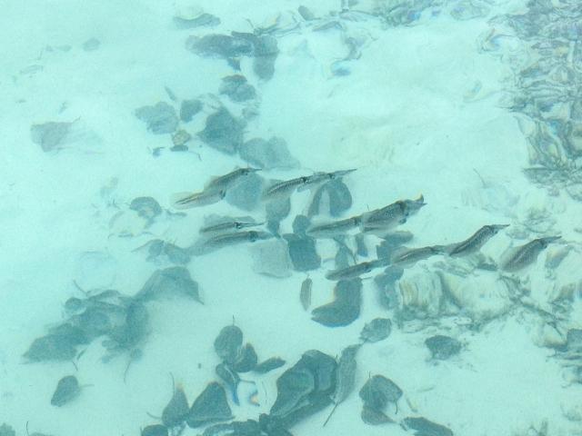 Maldives_212