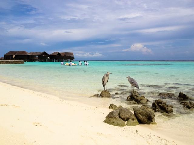 Maldives_601